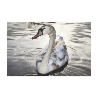 """14"""" x 11"""" Canvas featuring Winter Swan"""