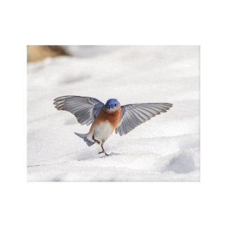 14x11 Eastern Bluebird dancing in the snow Canvas Print