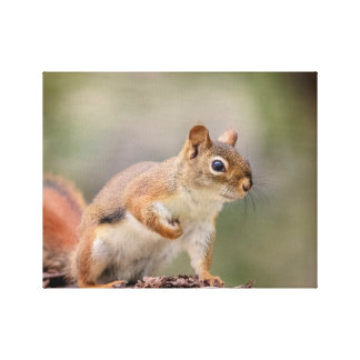 14x11 Red Squirrel Canvas Print