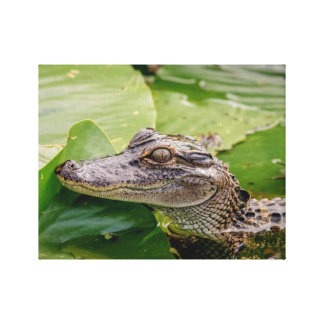 14x11 Young Alligator Canvas Print