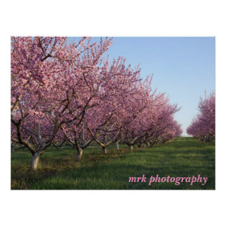 158, mrk photography poster