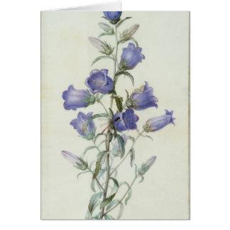 15:Campanula: Medium  1787 Greeting Card