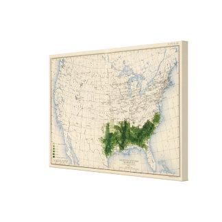 165 Cotton/sq mile Canvas Print