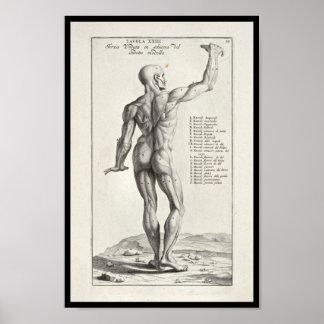 1691 Artistic Anatomy Muscles Body Art Print