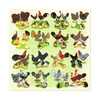 16 Chicken Families Canvas Print