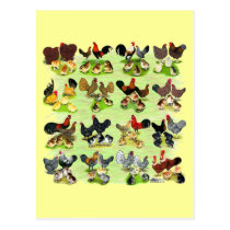 16 Chicken Families Postcard