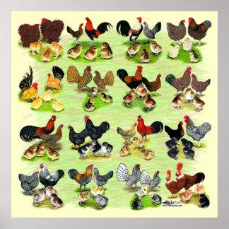 16 familias del pollo póster