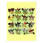 16 familias del pollo tarjeta postal
