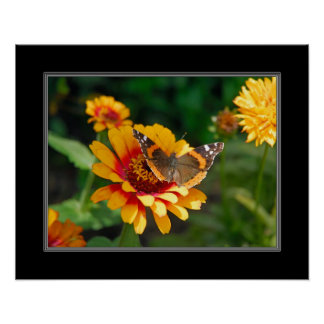 16x20 Indian Blanket Wildflower and Butterfly Poster