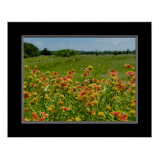 16x20 Indian Blanket Wildflower Poster