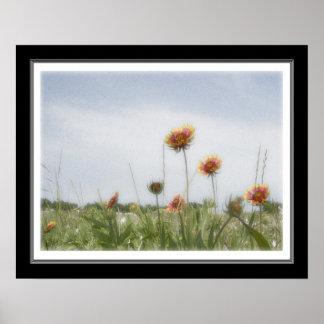 16x20 Indian Blanket Wildflower Poster