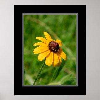 16x20 Wildflower Brown Eyed Susan Flower Poster