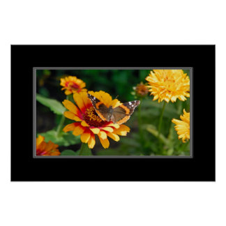 16x24 Indian Blanket Wildflower and Butterfly Poster