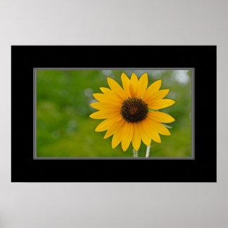 16x24 Single Sunflower Print