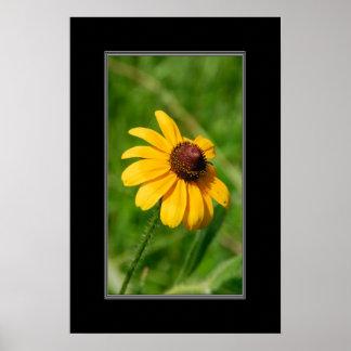 16x24 Wildflower Brown Eyed Susan Flower Poster