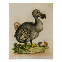 1760 Dodo Bird Vintage Illustration Print