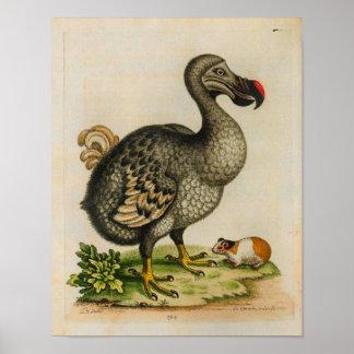 1760 Dodo Bird Vintage Illustration Print