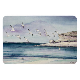 1774 gaviotas en la playa de Sandy Iman Flexible
