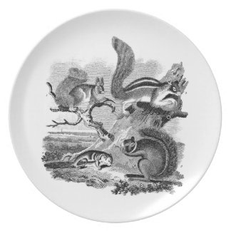 1800s Vintage Squirrels Illustration - Squirrel Party Plate