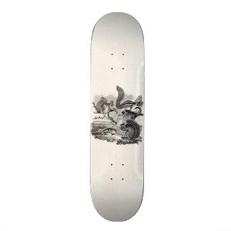 1800s Vintage Squirrels Illustration - Squirrel Skateboard
