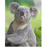 180px-Koala_bear Cut Outs