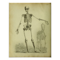 1824 Skeleton Human and Horse Anatomy Print