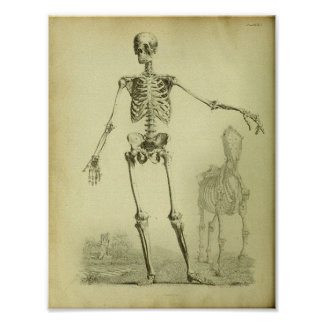1824 Skeleton Human and Horse Anatomy Print