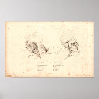 1833 Head & Neck Muscles Vintage Anatomy Print