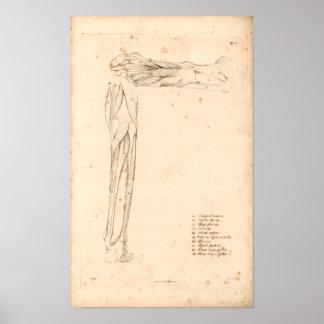 1833 Muscles of Foot Vintage Anatomy Print