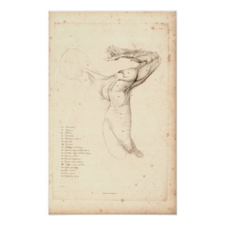1833 Muscles of Shoulder Vintage Anatomy Print