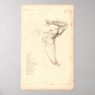 1833 Muscles of Shoulder Vintage Anatomy Print