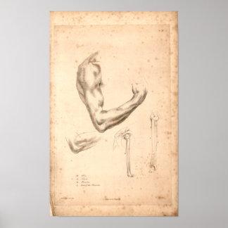 1833 Vintage Arm Anatomy Print