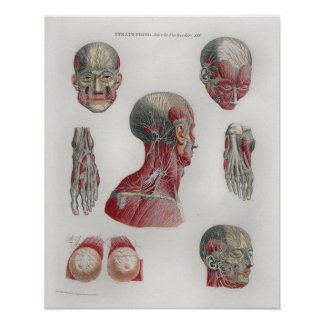 1833 Vintage Nerves Head Face Anatomy Poster