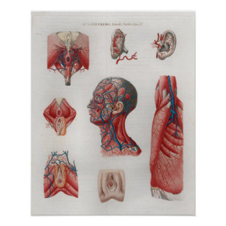 1833 Vintage Veins Head Face Anatomy Poster
