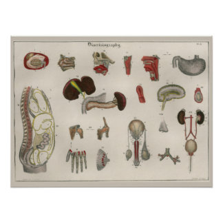 1837 Vintage Internal Organs Anatomy Art Poster