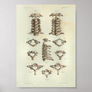 1844 Vintage Anatomy Print Cervical Spine