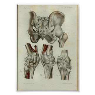 1844 Vintage Anatomy Print Hip Knee