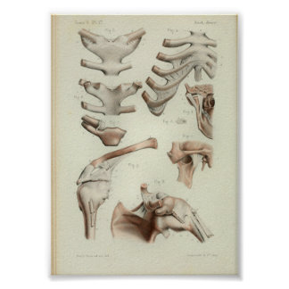1844 Vintage Anatomy Print Joints Articulations