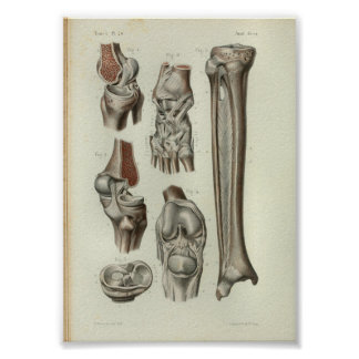 1844 Vintage Anatomy Print Knee Ankle