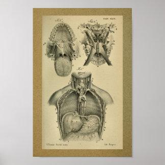 1850 Vintage Anatomy Print Abdominal Cavity