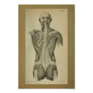 1850 Vintage Anatomy Print Back Muscles at Zazzle