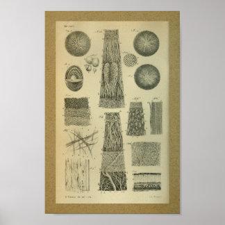 1850 Vintage Anatomy Print Eye Internal