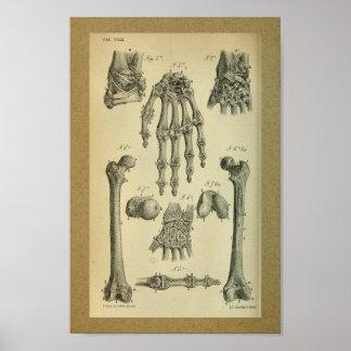 1850 Vintage Anatomy Print Hand Wrist