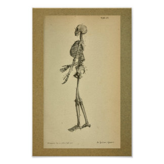 1850 Vintage Anatomy Print Skeleton