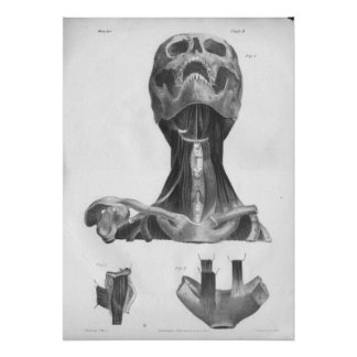 1854 Vintage Anatomy Head & Neck B/W Print