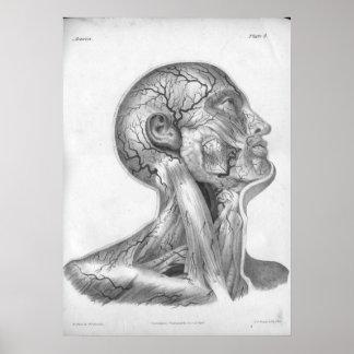 1854 Vintage Head & Neck Arteries Anatomy Print