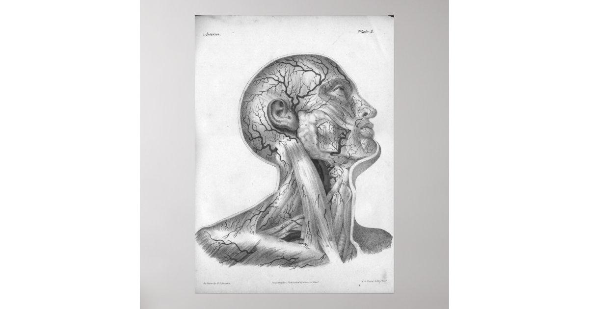 1854 Vintage Head Neck Arteries Anatomy Print Zazzle