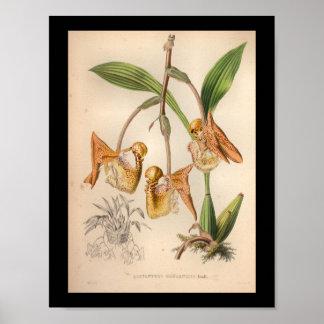 1860 Vintage Orchid Flower Print Orange Spotted