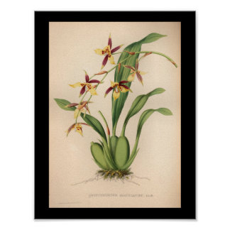 1860 Vintage Orchid Flower Print Purple