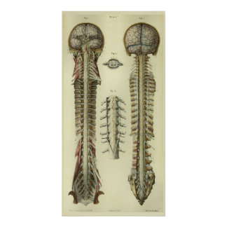 1866 Brain Spinal Cord Nerves Anatomy Print